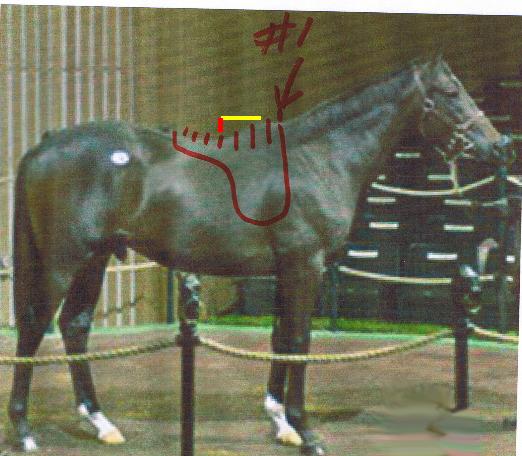 tracinghorse